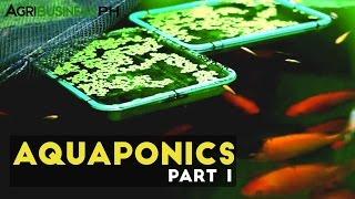 Aquaponics in the Philippines- Agribusiness Season 1 Episode 4 Part 1
