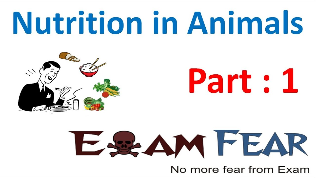 biology nutrition in animals part 1 introduction class 7 vii youtube