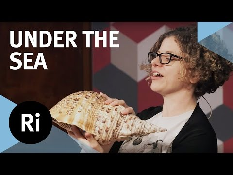 Under the Sea - With Helen Scales