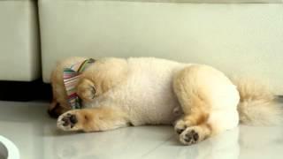【TOYOTA DOG サークル】おでかけムービー おもしろ寝相篇