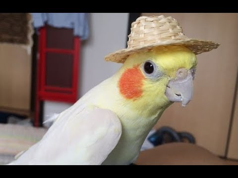 Funniest and Cutest Parrots Videos 2018