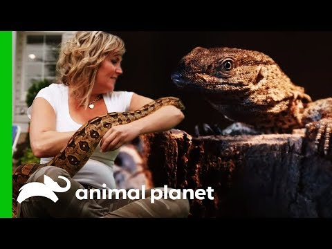 'The Snake Lady' Adds Her First Lizard To Her Collection | Scaled