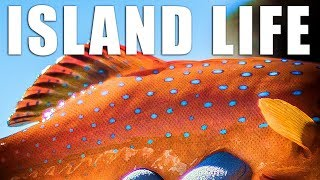 Video Catch and Cook Coral Trout while Camping and Fishing on a Remote Island! download MP3, 3GP, MP4, WEBM, AVI, FLV Juni 2018