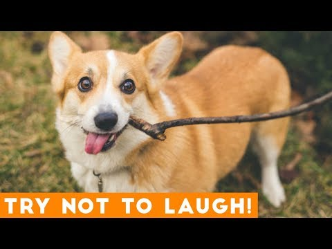 Try Not To Laugh Funniest DOG Compilation 2019 | Funny Pet Videos