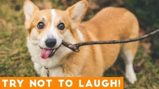 Try Not To Laugh Funniest DOG Compilation 2019  Funny Pet Videos