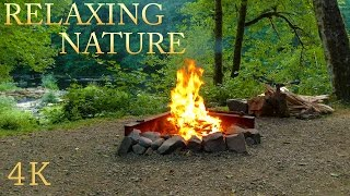 4K Campfire, Relaxing Crackling and River Forest Sound : Nature Sounds to Sleep and Meditation