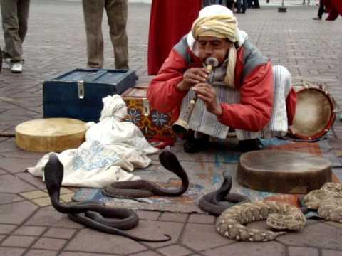 morocco snake charmer