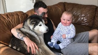 When my baby is crying I just bring in the huskies!