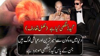 Gidar Singhi In Urdu - Jackal Horn - Mysteries Of Animals - Purisrar Dunya Urdu Documentary
