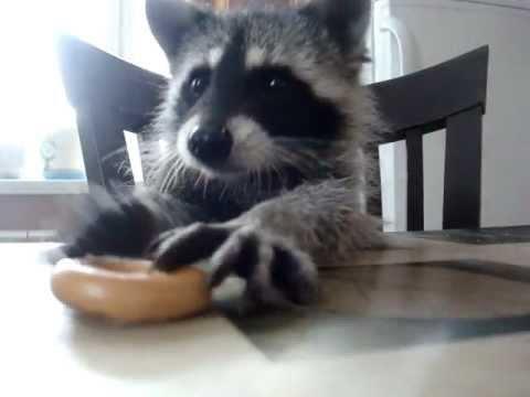кот обедает фото