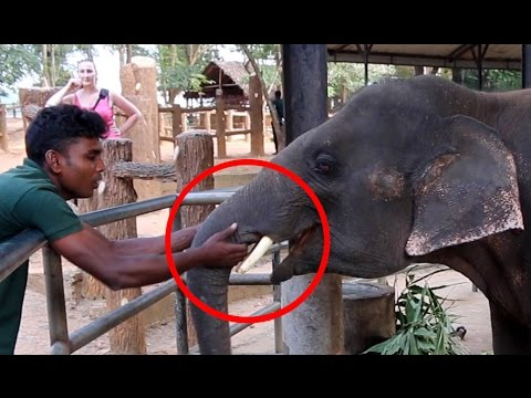 Cute Young Elephant Love To Cuddle - Cute Animals