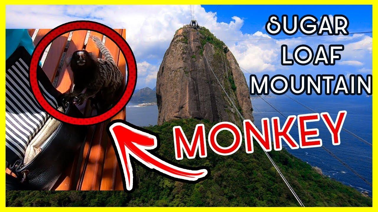 MONKEYS on SUGAR LOAF MOUNTAIN   BRASIL-RIO DE JANEIRO