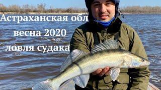 Рыбалка в Астрахани весна 2020 САМОИЗОЛЯЦИЯ НА РЕКЕ Ловля судака в Никольском Часть 2