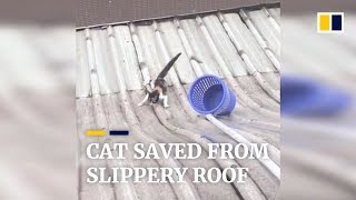Cat in a slippery situation saved from roof by office workers