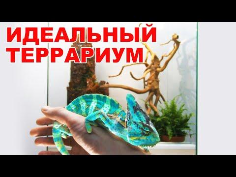 Террариум для хамелеона своими руками для хамелеона