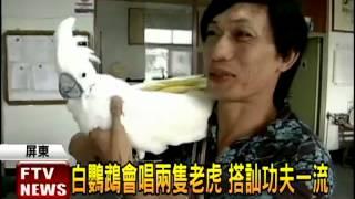 超好認!白鸚鵡會唱「兩隻老虎」-民視新聞
