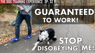 STOP DISOBEYING! PRACTICAL Dog Training in Public That WILL Work!