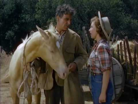 The Palomino Western 1950 Jerome Courtland, Beverly Tyler, Joseph Calleia