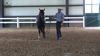How to Move Your Horse's Shoulders on the Ground | Ground Work Series 3/6    Exercise #2 FQ