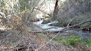 San Luis Rey River Meditation in the Cleveland National Forest