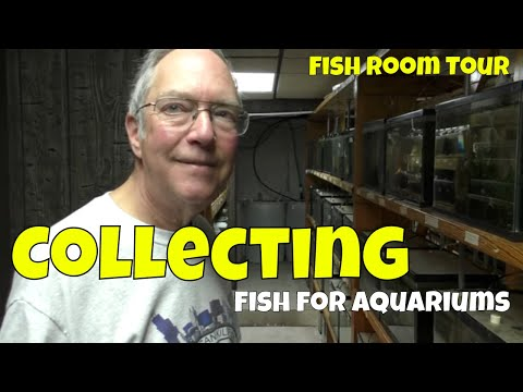 Years Of Collecting Killifish And This Is What He Breeds In His Fish Room
