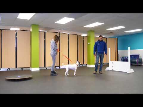 Dog Is Afraid Of Walks, Rehabilitation | K9 Connection Dog Training, Buffalo NY