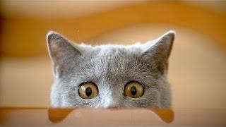 Смешные видео Смешные Кошки Забавные животные Попробуйте не смеяться