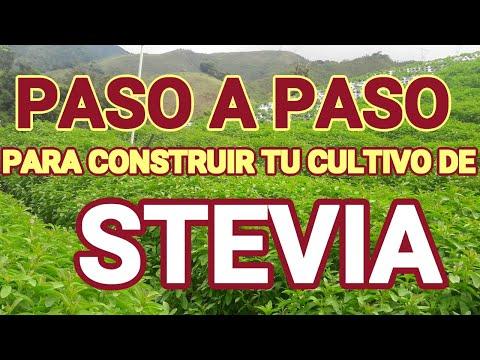 CULTIVO DE STEVIA EN COLOMBIA EPUB DOWNLOAD