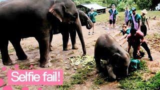 Baby Elephant Ruins Selfie | Hilarious Selfie Fail