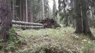 Umgefallener Baum im Dolomiten Gebirge in HD