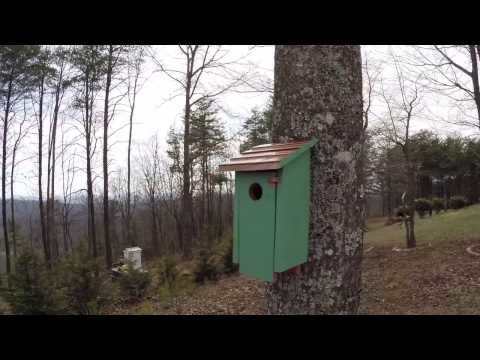 Bluebird House - Weatherproofing and Hanging Tips