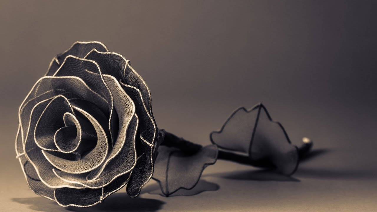 Top Most Beautiful Black Roses In The World