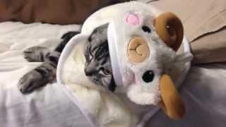 羊の着ぐるみを着る猫