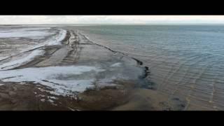 Обзорное видео аэросъемки птиц