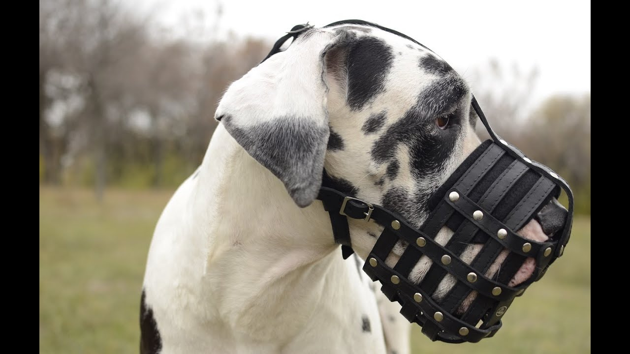 how to train a dog to wear a muzzle