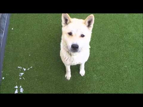 Dogs Trust Manchester: Fuji