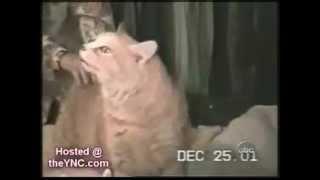 кошки бывают странные))).wmv