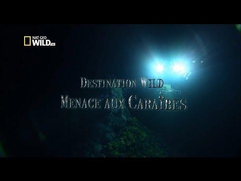Menace aux Caraïbes // Documentaire