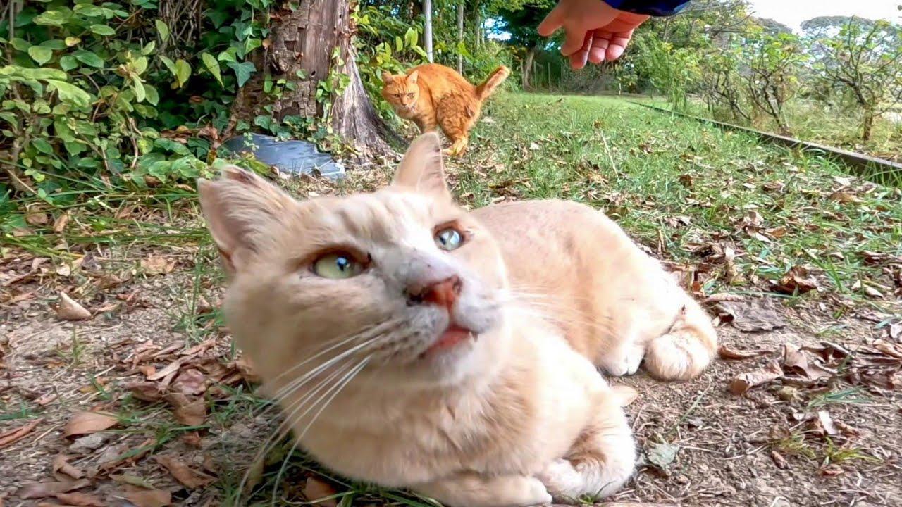 公園の仲良し猫二人組、ジョギングコース脇でノンビリ寝ていました。