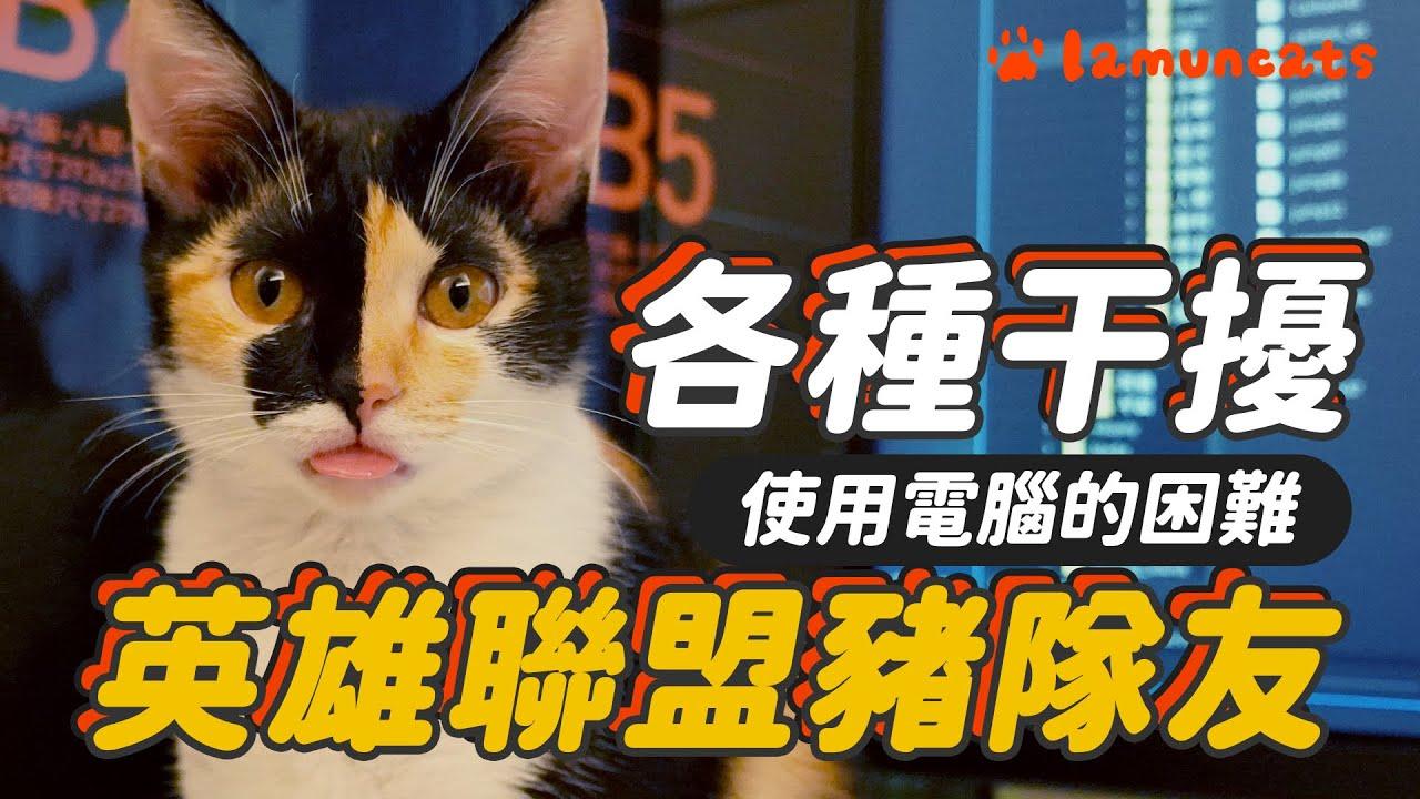 被貓GANK!貓與電腦根本是世敵┃拉姆有幾噗 ♧
