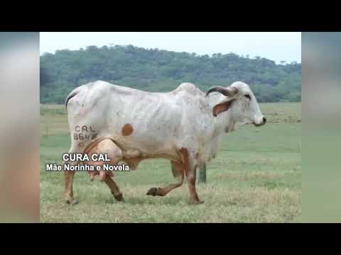 LOTE 54 – 0469BE, 0478BE, 7243BD, 7242BD