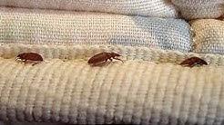 Certified Bed Bug Inspection Union County NJ 732-309-4209 - eliminexnj.com