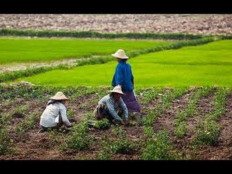 Cultivation Sensation ((LEVEL-UP))