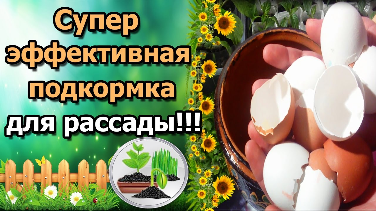 Картинки по запросу яичная скорлупа подкормка растений
