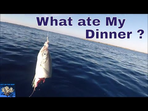 Solo Survival Fishing in Bimini Bahamas Gulfstream Crossing from Miami to Bimini