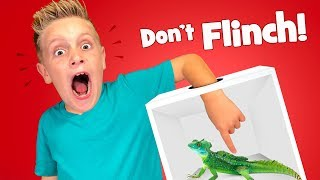 Don't Flinch!!! Mystery Box Challenge with KIDCITY Family