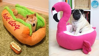 Most Unique Pet Beds You Can Actually Buy #1