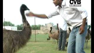 EMU FARMING ATTRACTS FARMERS IN RAJASTHAN