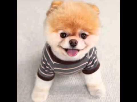 Susser Hund Youtube