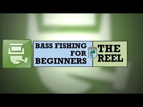 Bass Fishing for Beginners: The Reel